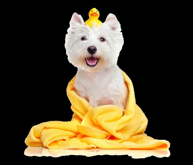 Gallipots Dog Grooming Hero Image