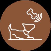 Dog Activities In East Yorkshire