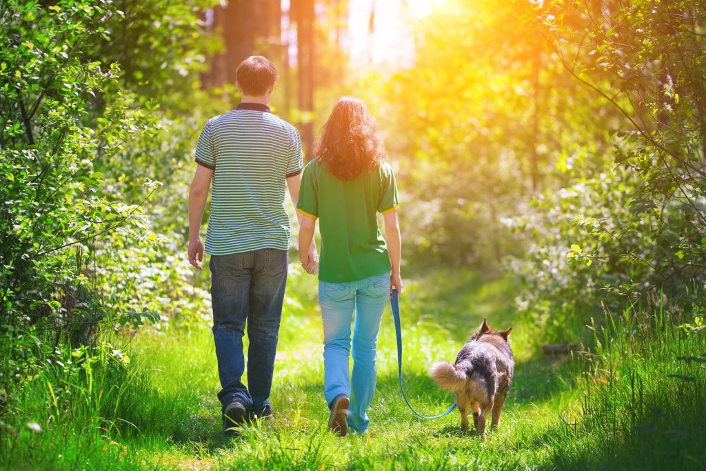Dog Walks In East Yorkshire