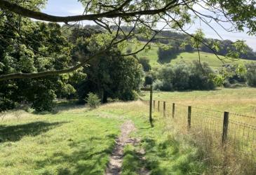 Best Dog Walks East Yorkshire